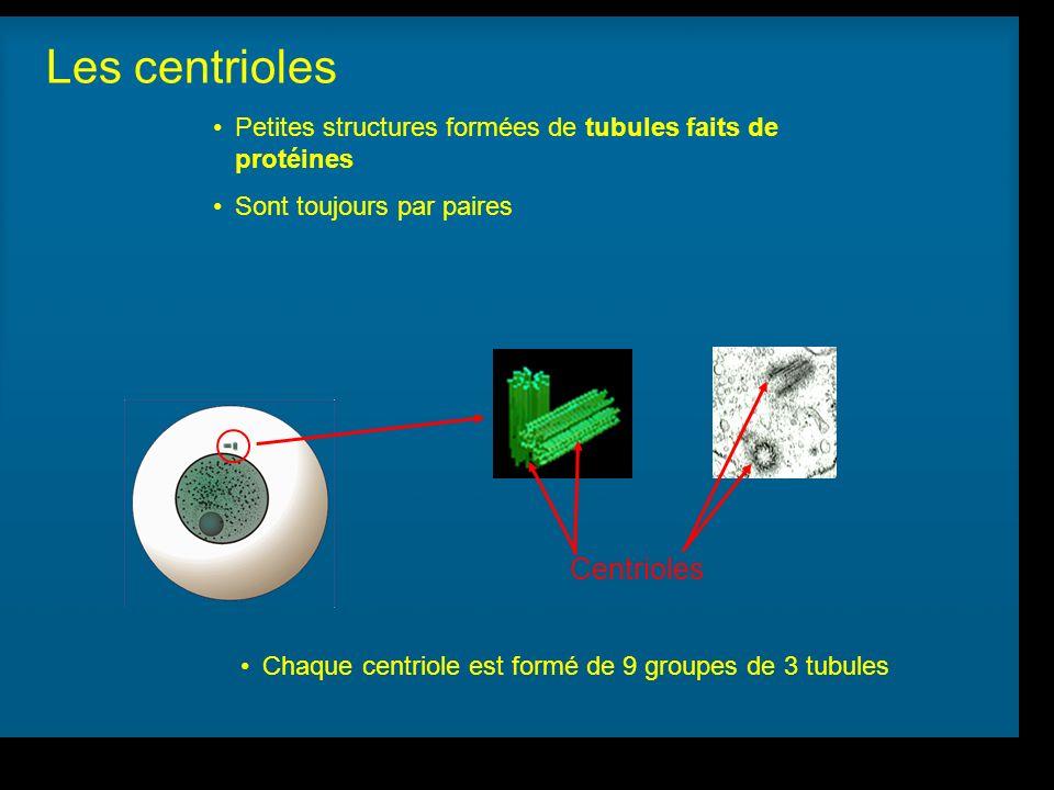 Les centrioles Centrioles