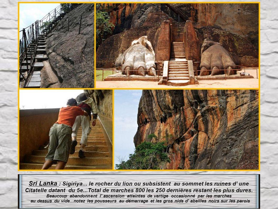Sri Lanka : Sigiriya... le rocher du lion ou subsistent au sommet les ruines d une