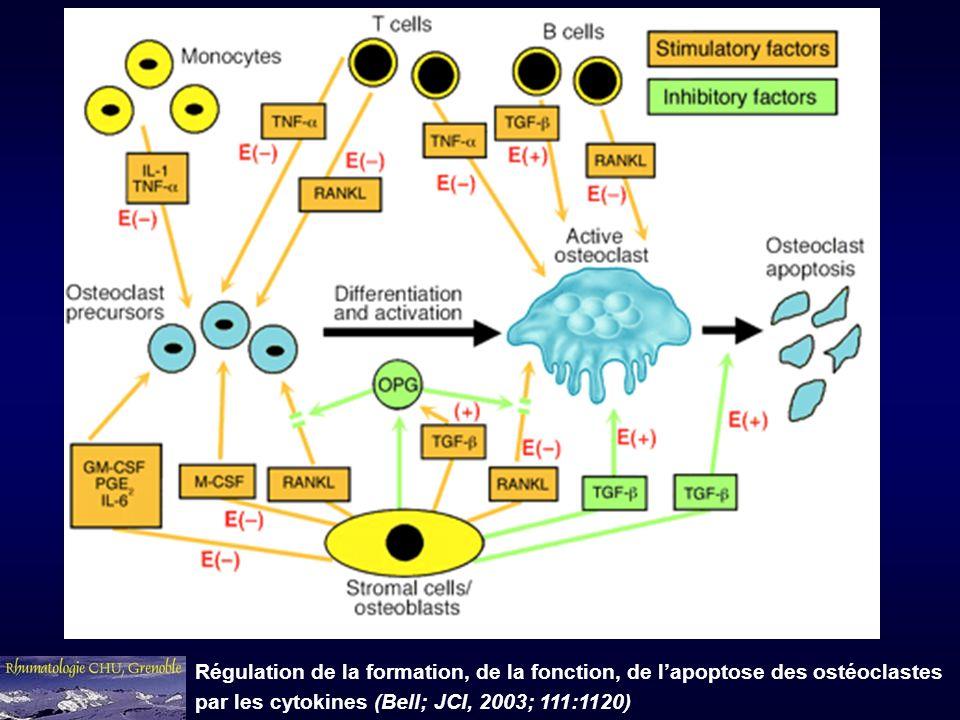 Régulation de la formation, de la fonction, de l'apoptose des ostéoclastes