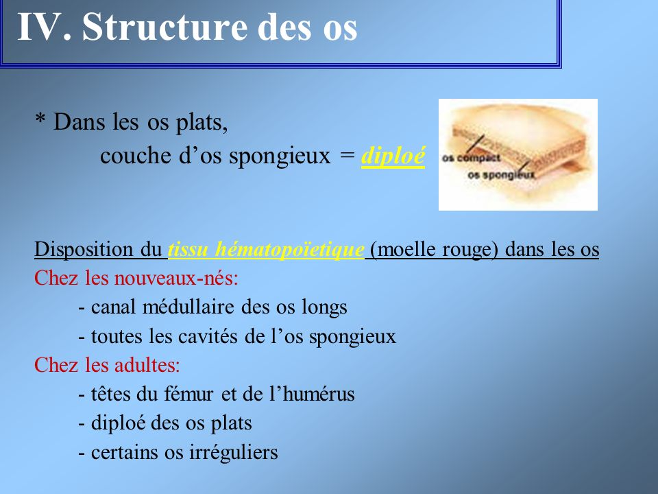 IV. Structure des os * Dans les os plats,