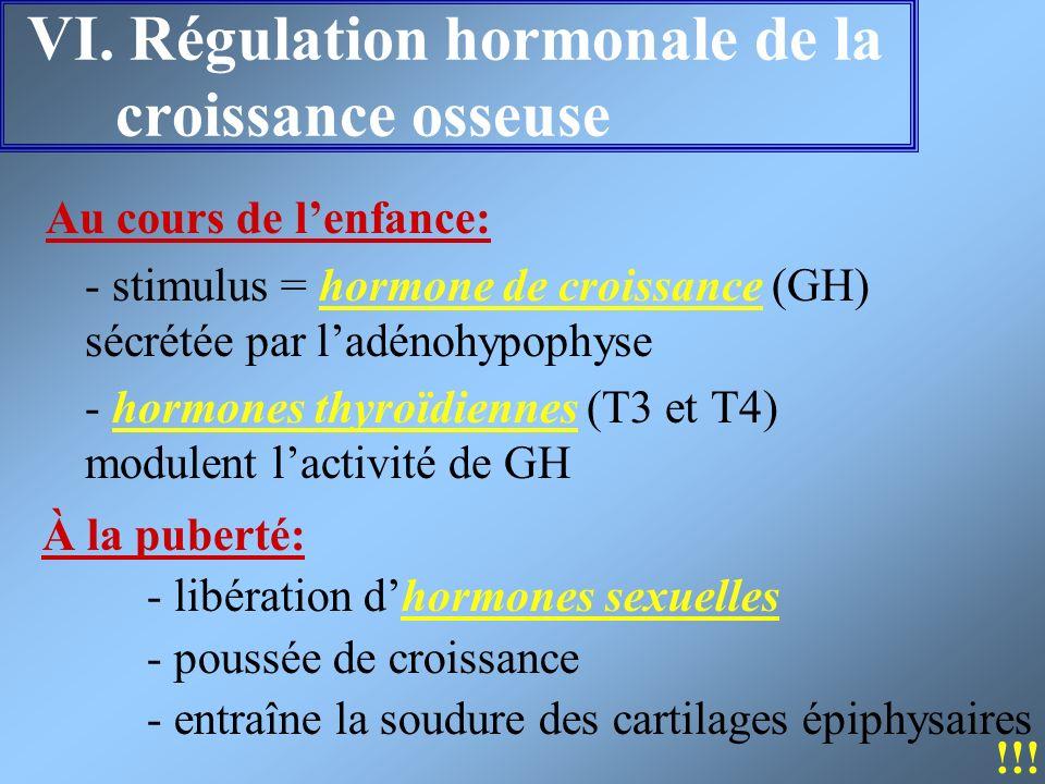 VI. Régulation hormonale de la croissance osseuse