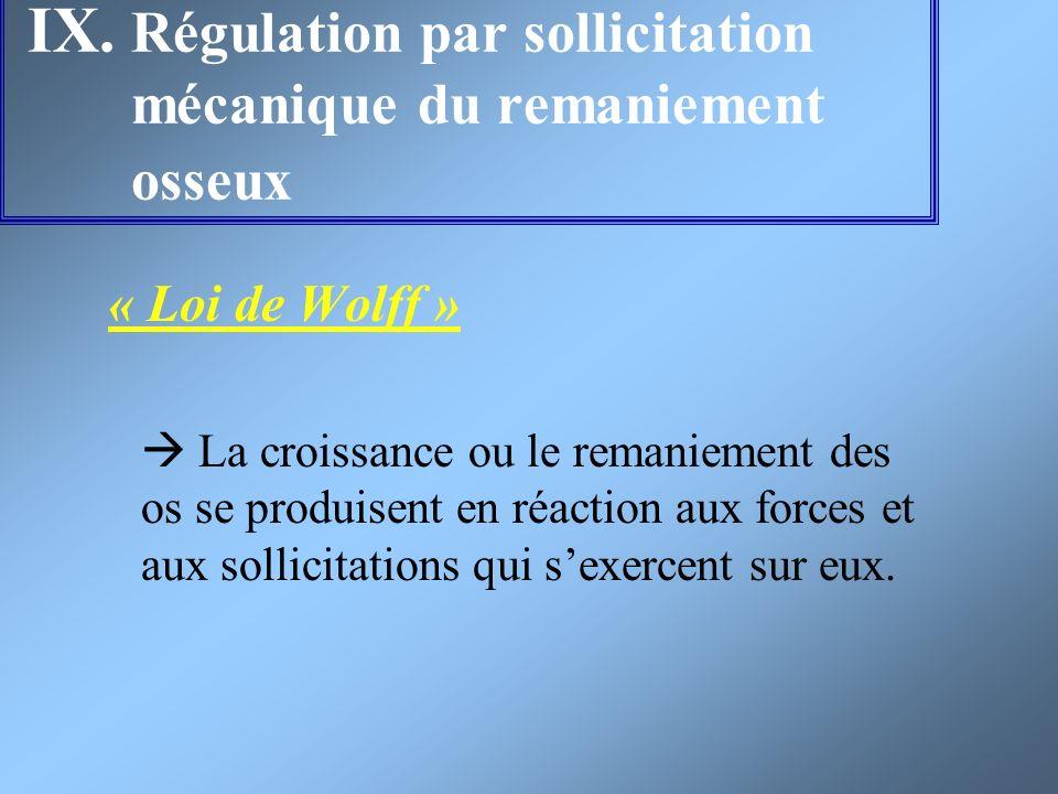 IX. Régulation par sollicitation mécanique du remaniement osseux