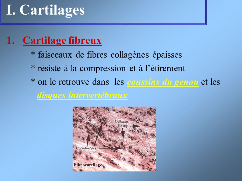 I. Cartilages Cartilage fibreux