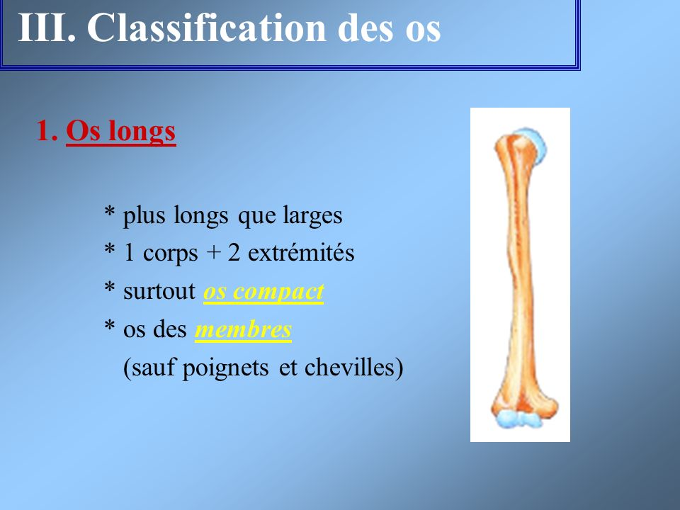 III. Classification des os