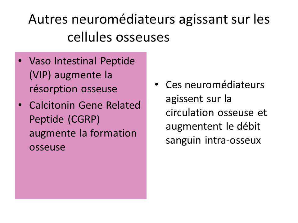 Autres neuromédiateurs agissant sur les cellules osseusesosseuses :