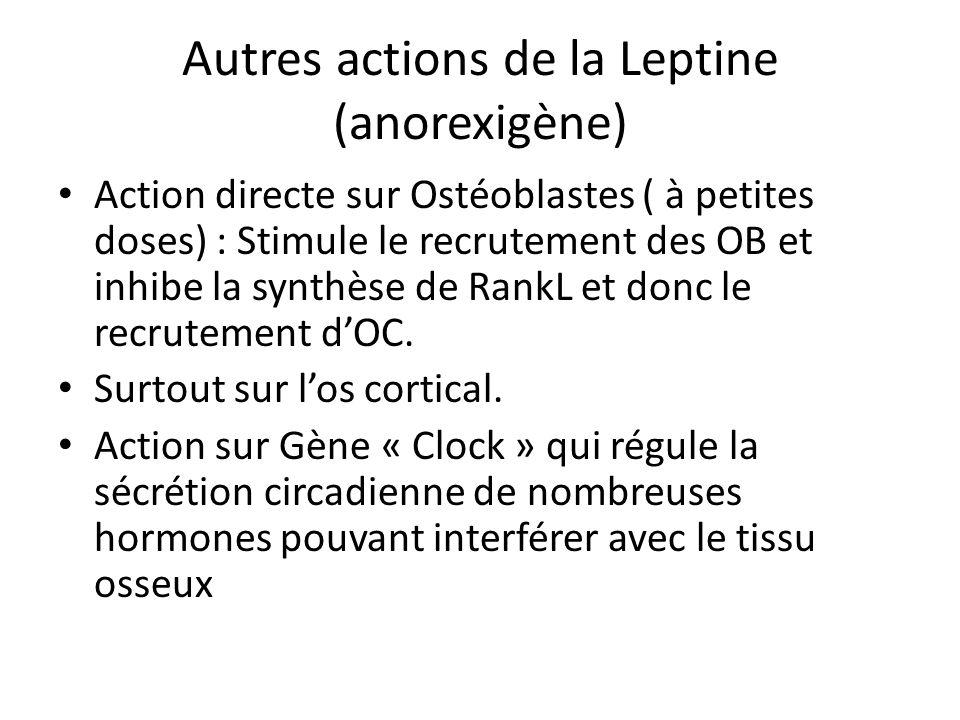 Autres actions de la Leptine (anorexigène)