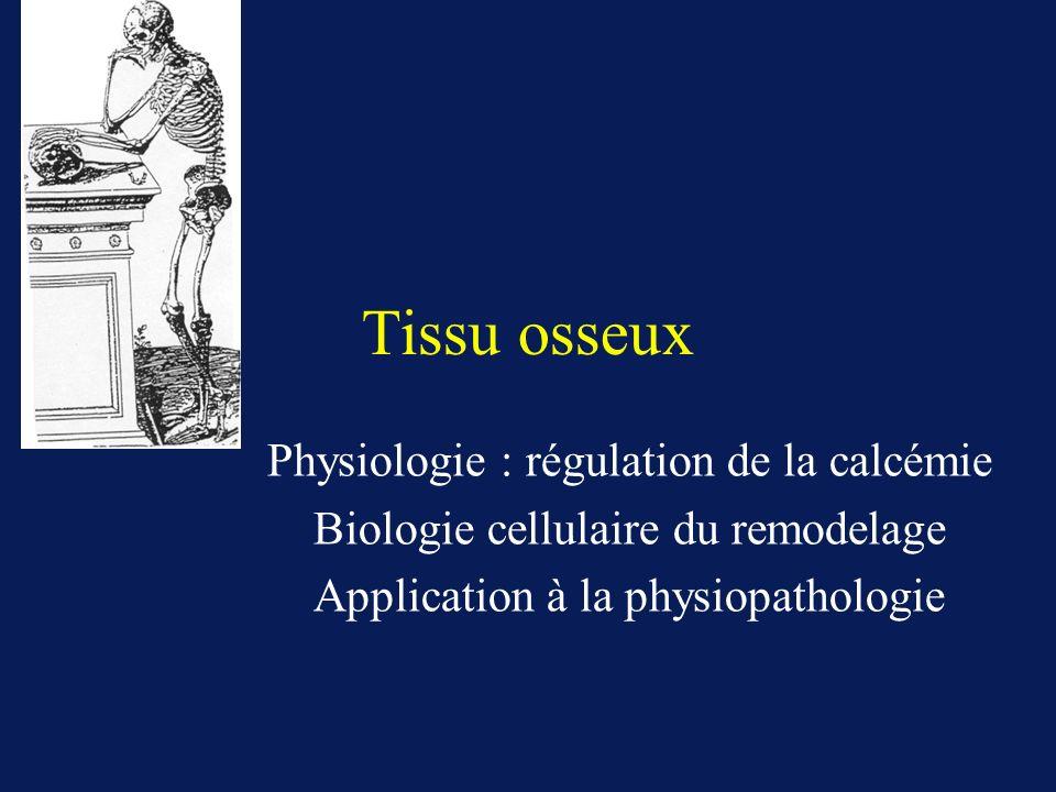 Tissu osseux Physiologie : régulation de la calcémie