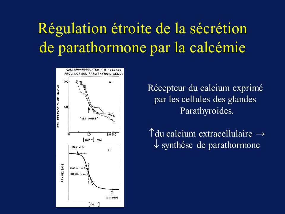 Régulation étroite de la sécrétion de parathormone par la calcémie