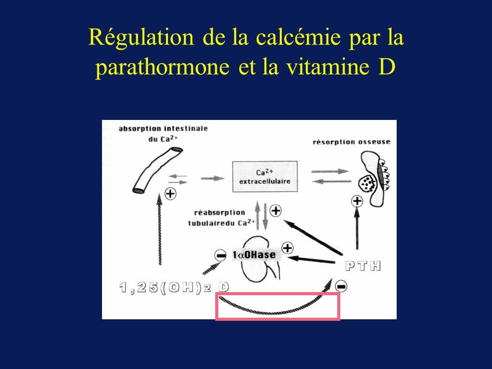 Régulation de la calcémie par la parathormone et la vitamine D