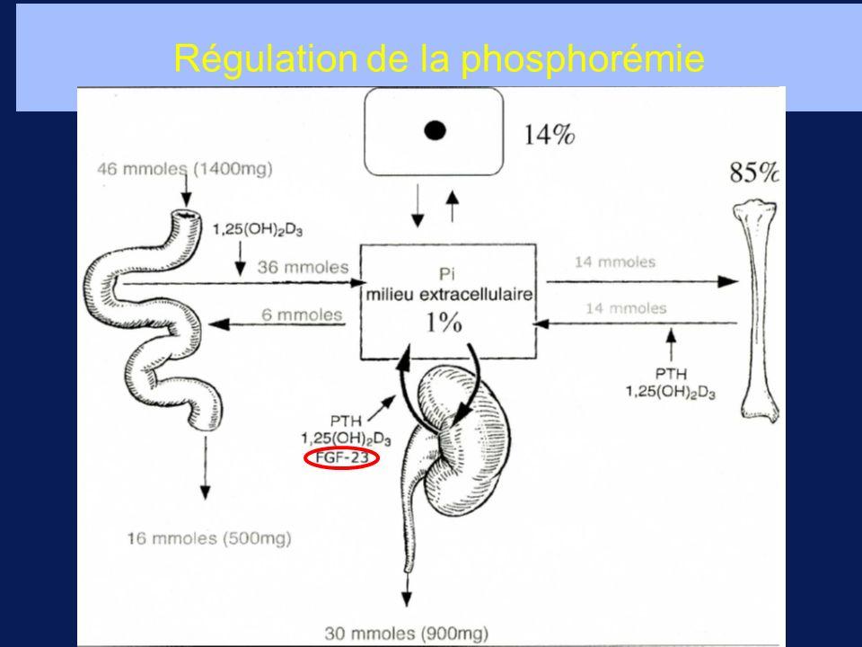 Régulation de la phosphorémie
