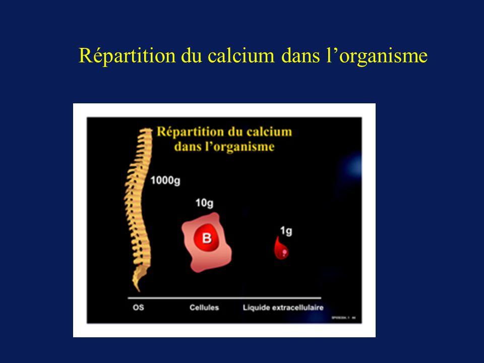 Répartition du calcium dans l'organisme