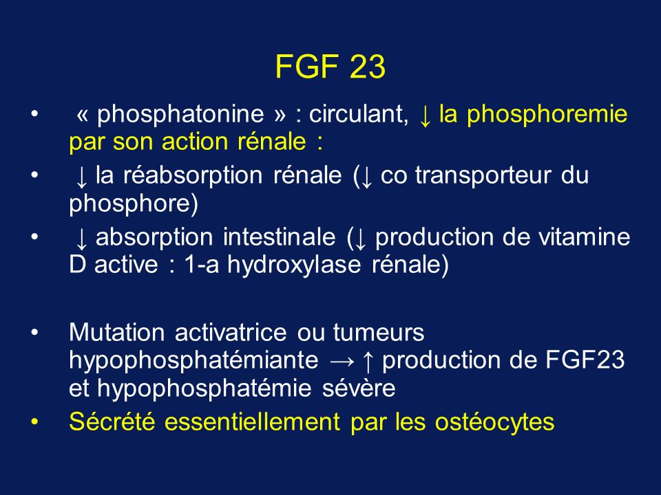 FGF 23 « phosphatonine » : circulant, ↓ la phosphoremie par son action rénale : ↓ la réabsorption rénale (↓ co transporteur du phosphore)