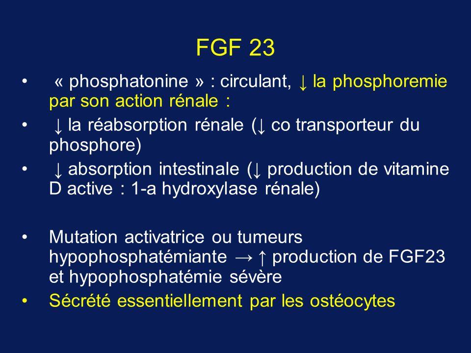 FGF 23 « phosphatonine » : circulant, ↓ la phosphoremie par son action rénale : ↓ la réabsorption rénale (↓ co transporteur du phosphore)