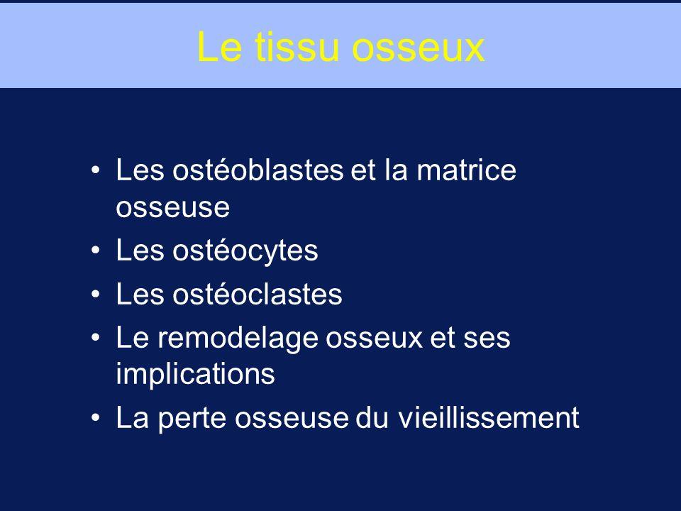 Le tissu osseux Les ostéoblastes et la matrice osseuse Les ostéocytes