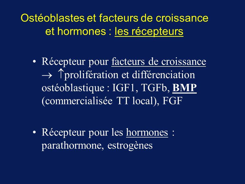 Ostéoblastes et facteurs de croissance et hormones : les récepteurs