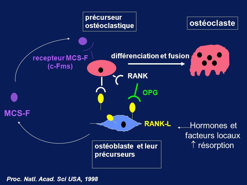 ostéoclaste MCS-F Hormones et facteurs locaux  résorption