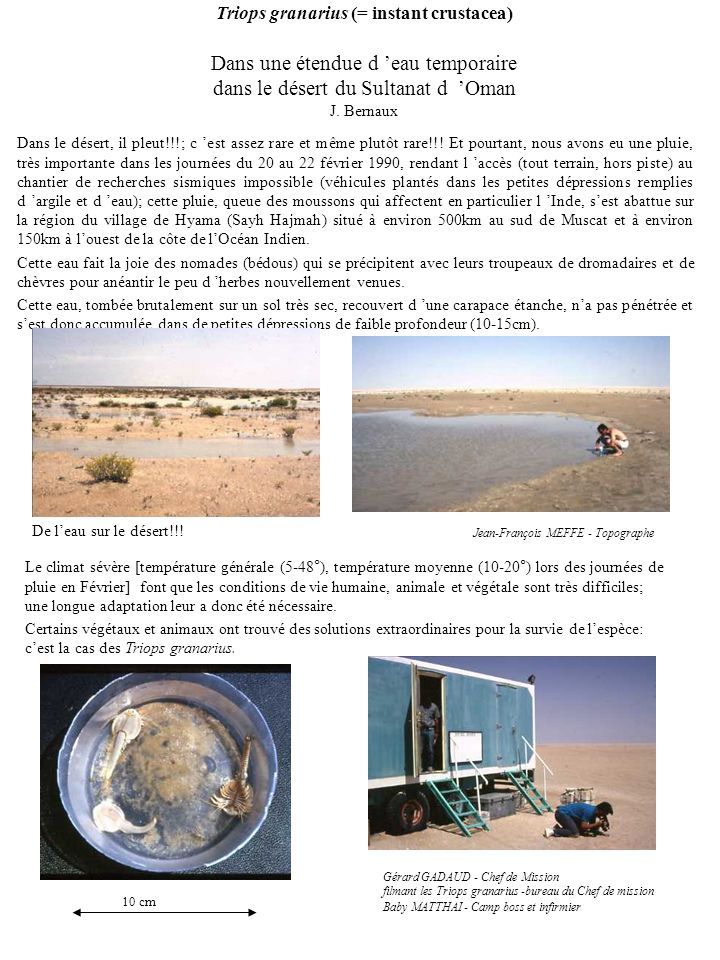 Triops granarius (= instant crustacea) Dans une étendue d 'eau temporaire dans le désert du Sultanat d 'Oman J. Bernaux