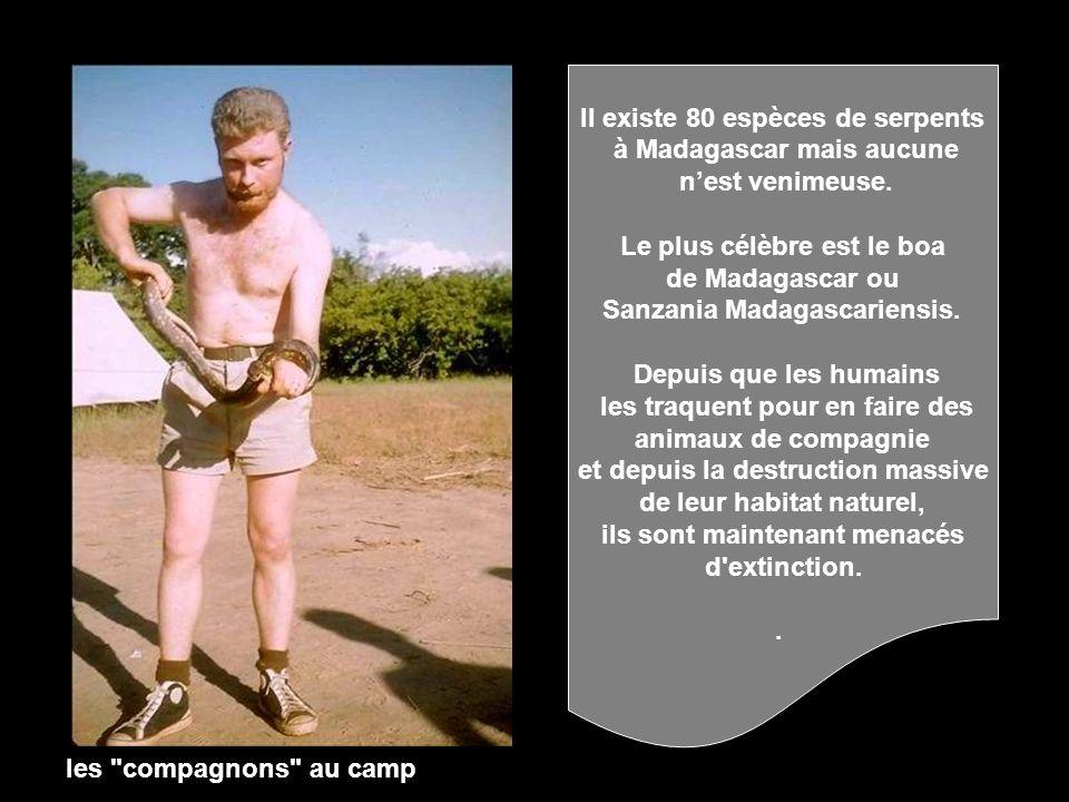 Il existe 80 espèces de serpents à Madagascar mais aucune