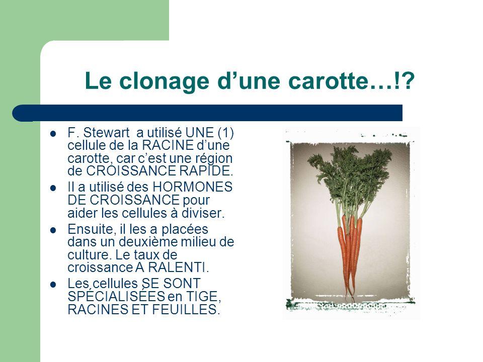 Le clonage d'une carotte…!
