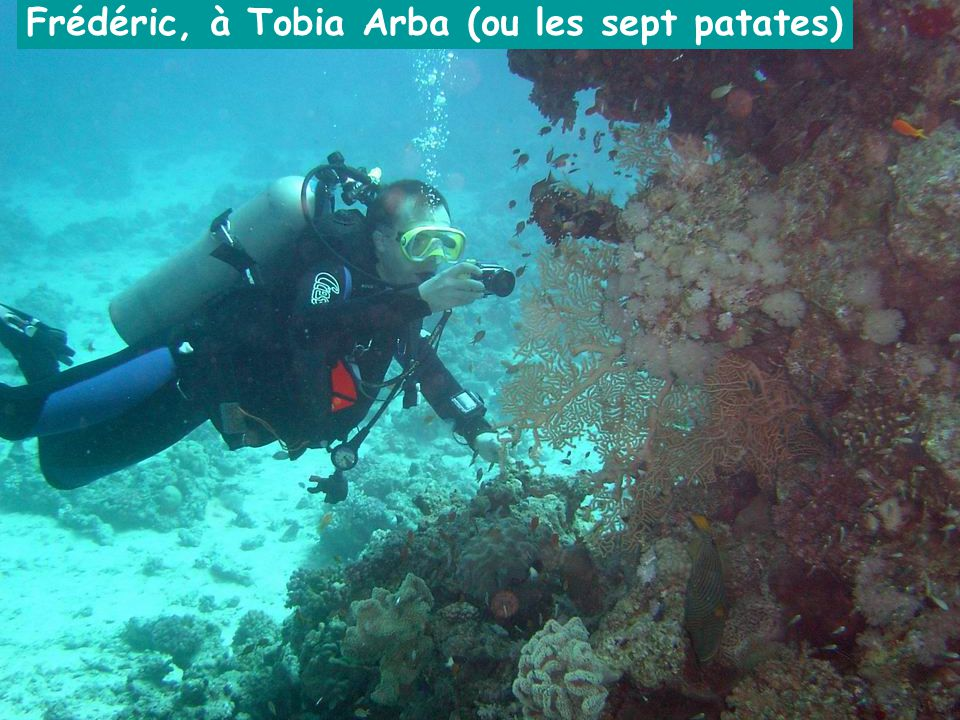 Frédéric, à Tobia Arba (ou les sept patates)