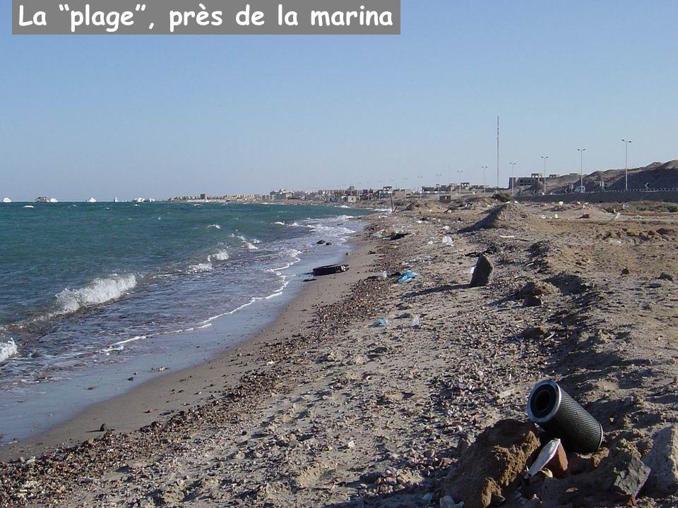 La plage , près de la marina