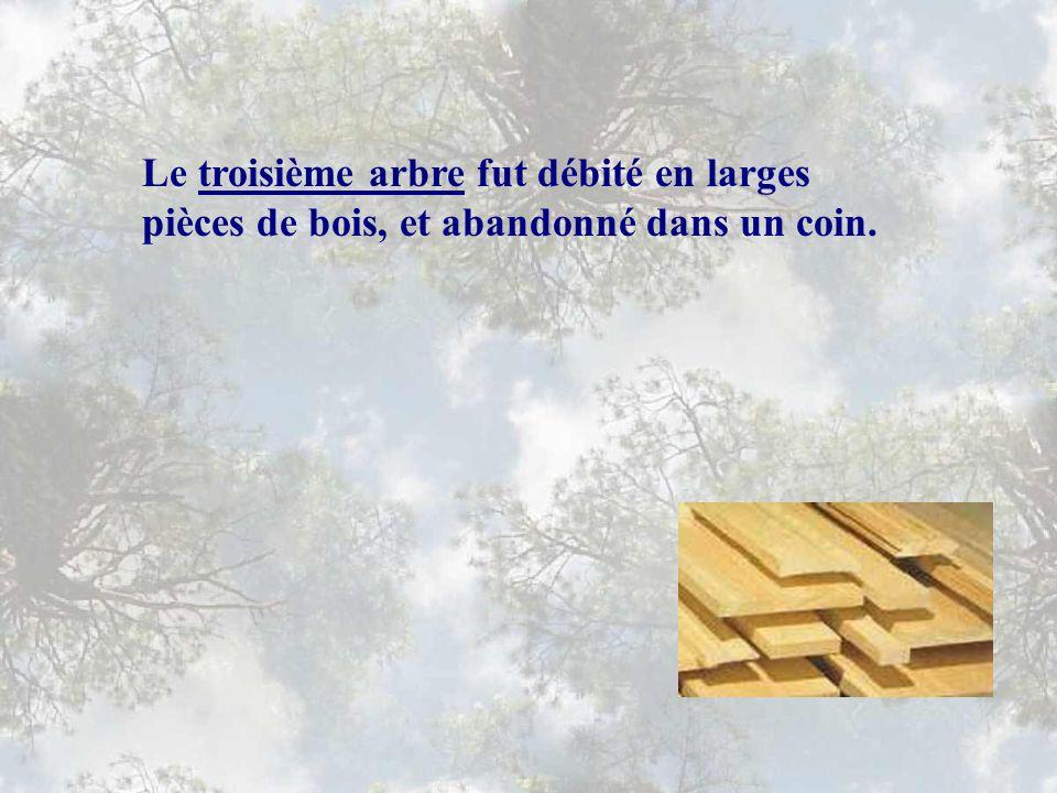 Le troisième arbre fut débité en larges pièces de bois, et abandonné dans un coin.