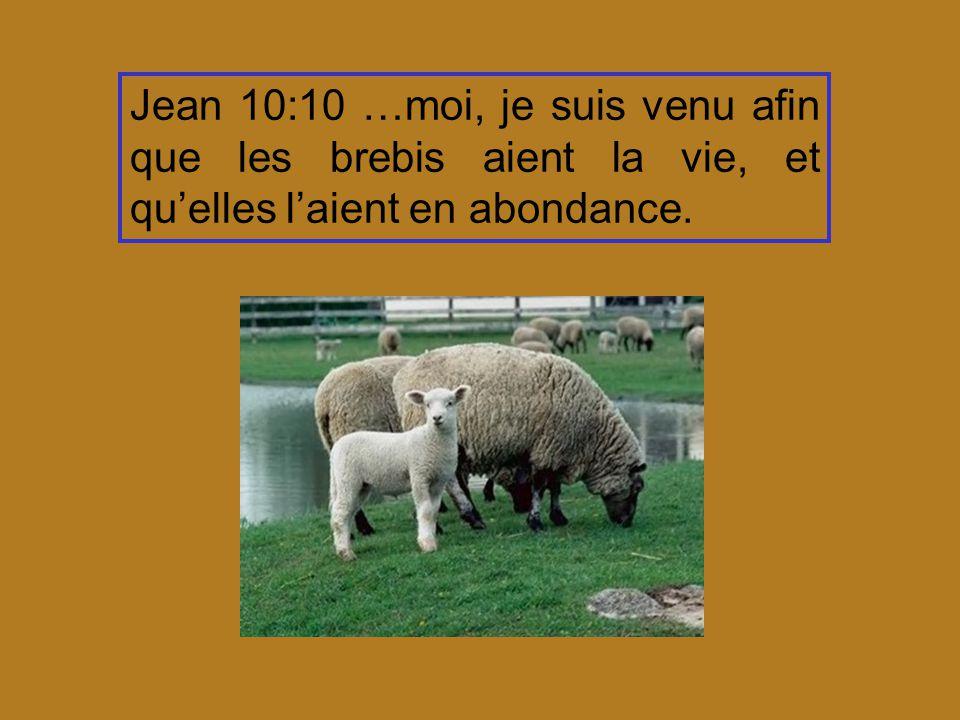 Jean 10:10 …moi, je suis venu afin que les brebis aient la vie, et qu'elles l'aient en abondance.