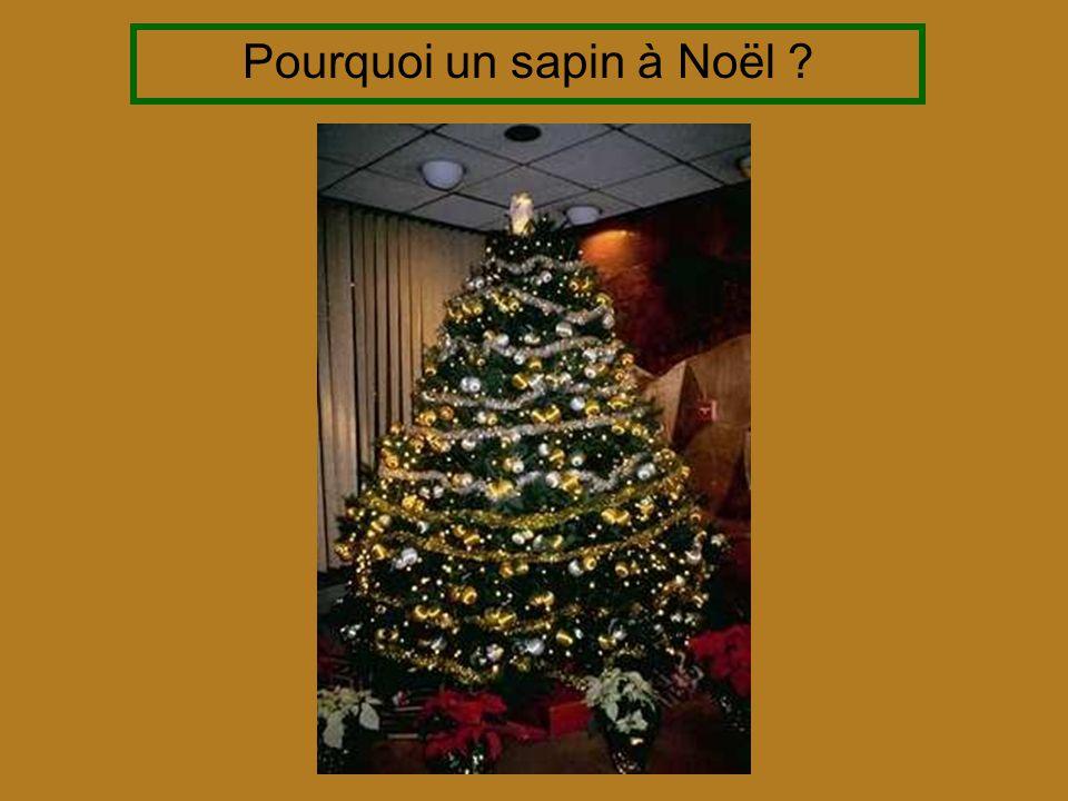 Pourquoi un sapin à Noël