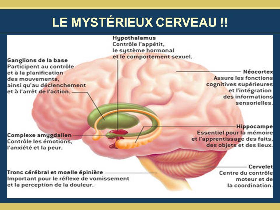LE MYSTÉRIEUX CERVEAU !!
