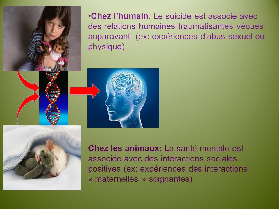 Chez l'humain: Le suicide est associé avec des relations humaines traumatisantes vécues auparavant (ex: expériences d'abus sexuel ou physique)