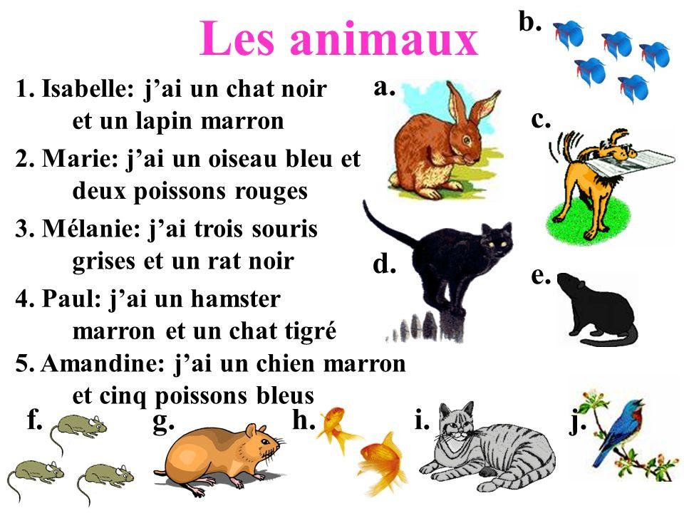 1. Isabelle: j'ai un chat noir et un lapin marron