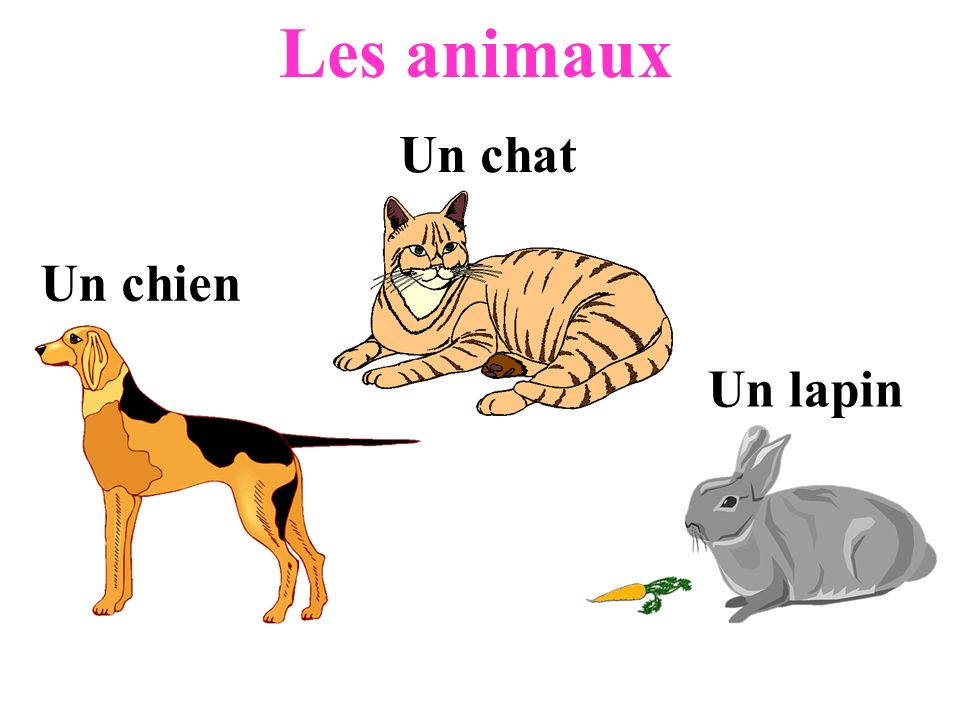 Les animaux Un chat Un chien Un lapin