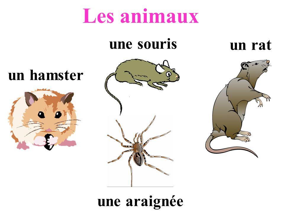 Les animaux une souris un rat un hamster une araignée