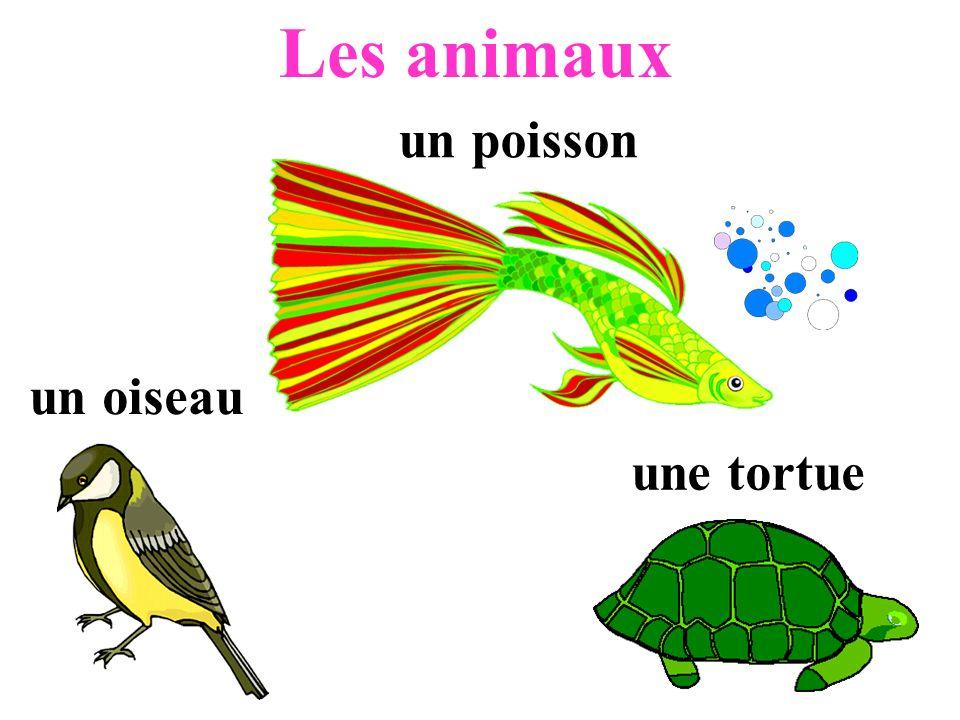 Les animaux un poisson un oiseau une tortue