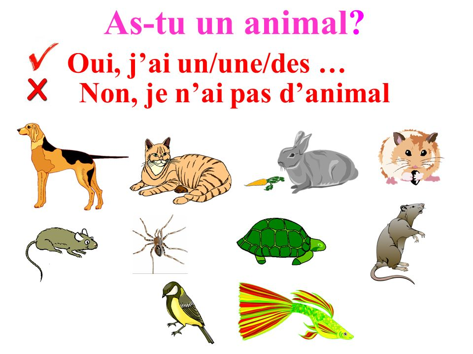 Non, je n'ai pas d'animal