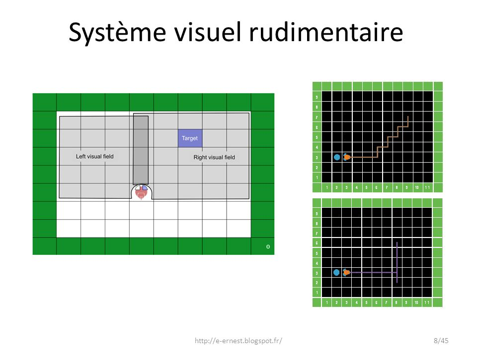 Système visuel rudimentaire