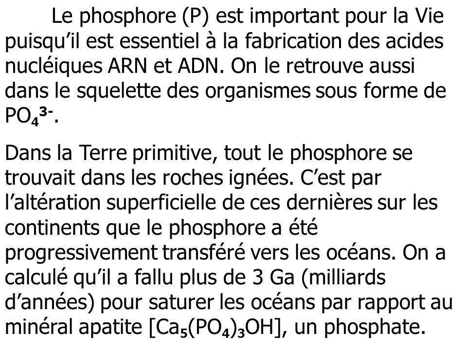 Le phosphore (P) est important pour la Vie puisqu'il est essentiel à la fabrication des acides nucléiques ARN et ADN. On le retrouve aussi dans le squelette des organismes sous forme de PO43-.