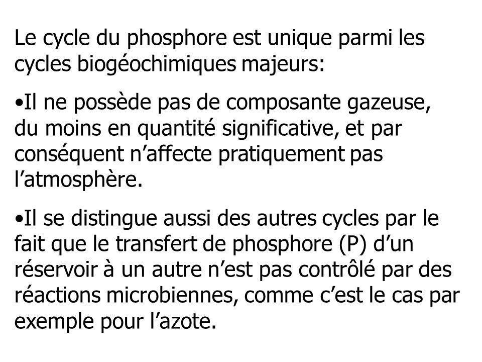 Le cycle du phosphore est unique parmi les cycles biogéochimiques majeurs: