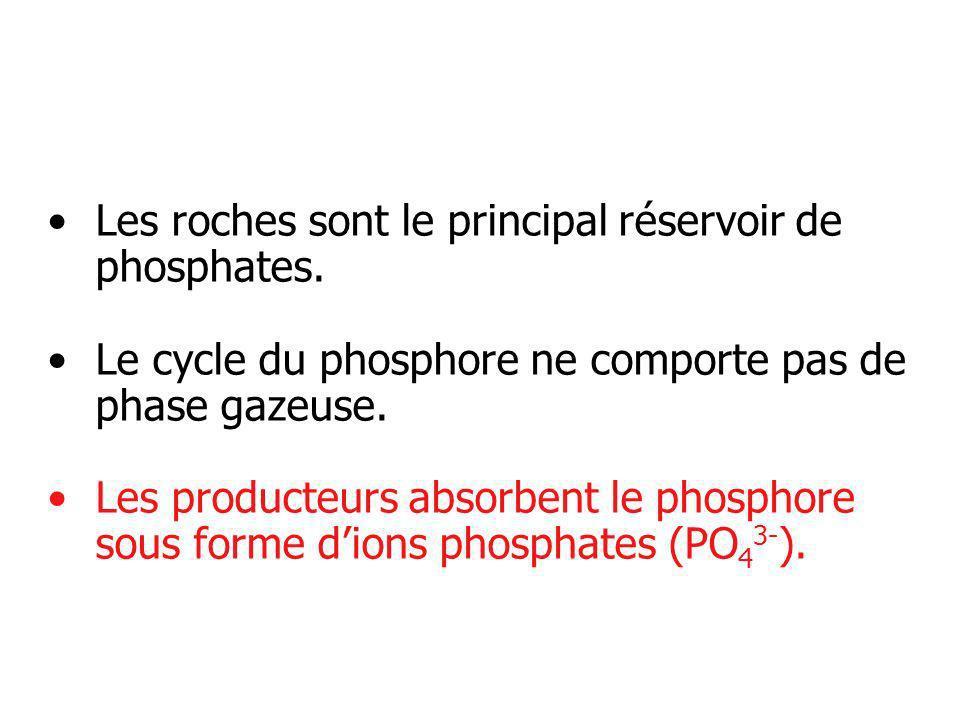 Les roches sont le principal réservoir de phosphates.