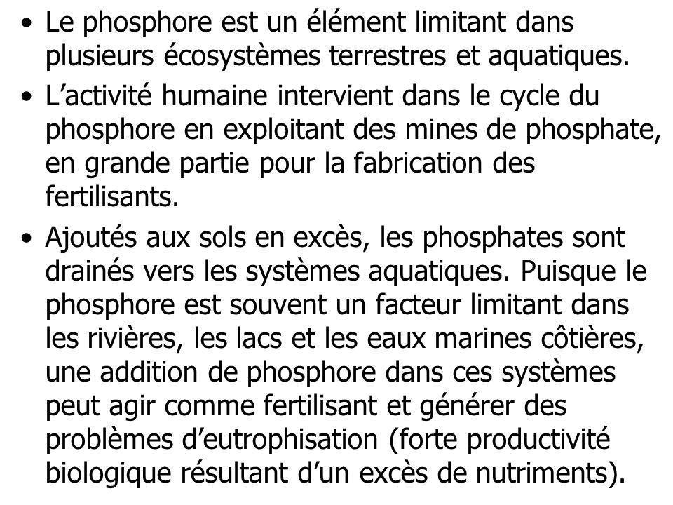 Le phosphore est un élément limitant dans plusieurs écosystèmes terrestres et aquatiques.