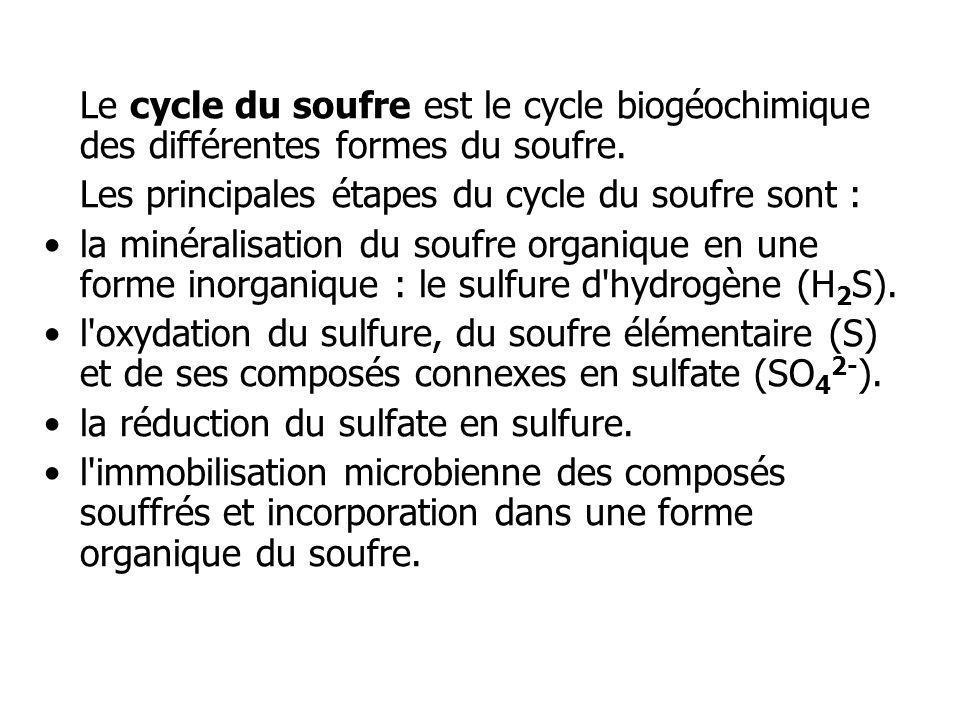 Les principales étapes du cycle du soufre sont :