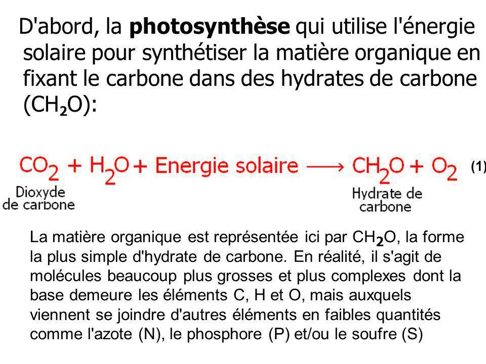 D abord, la photosynthèse qui utilise l énergie solaire pour synthétiser la matière organique en fixant le carbone dans des hydrates de carbone (CH2O):