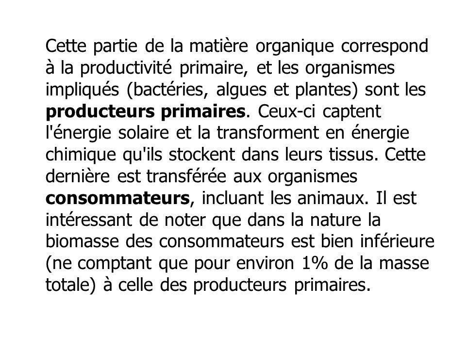 Cette partie de la matière organique correspond à la productivité primaire, et les organismes impliqués (bactéries, algues et plantes) sont les producteurs primaires.