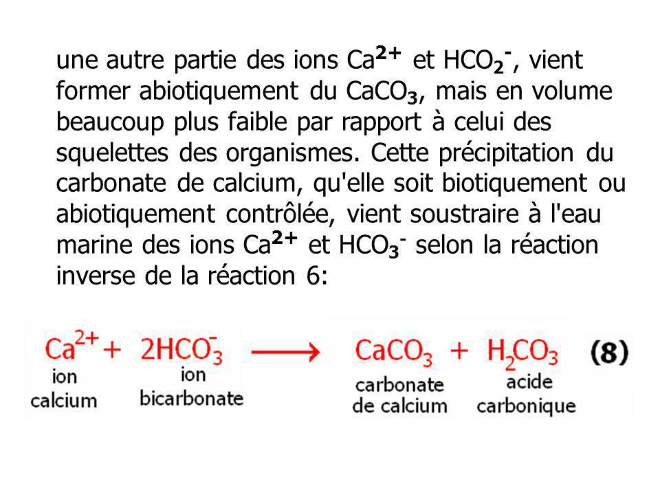 une autre partie des ions Ca2+ et HCO2-, vient former abiotiquement du CaCO3, mais en volume beaucoup plus faible par rapport à celui des squelettes des organismes.
