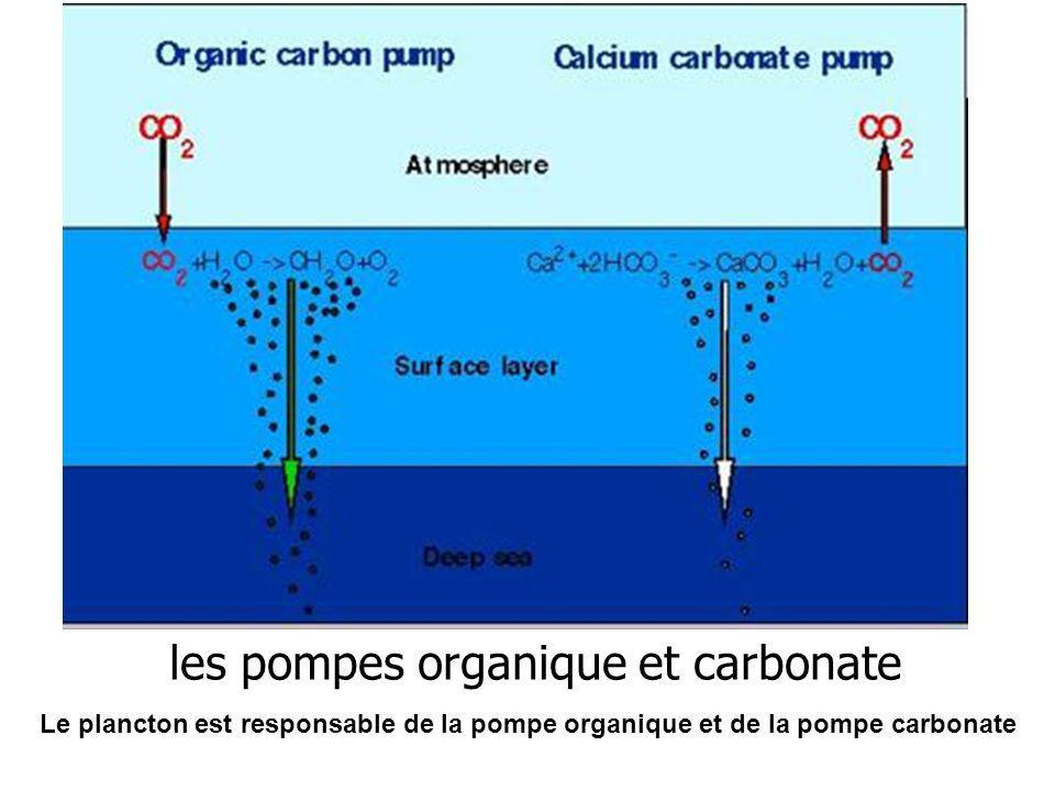 les pompes organique et carbonate