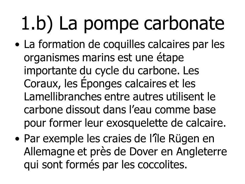 1.b) La pompe carbonate