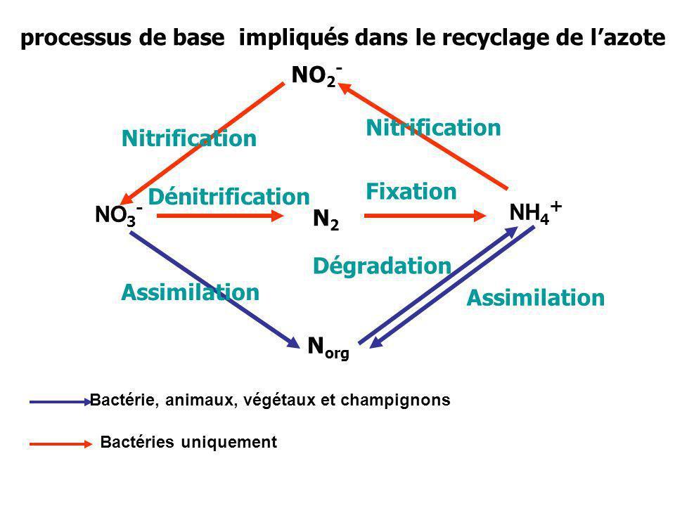 processus de base impliqués dans le recyclage de l'azote