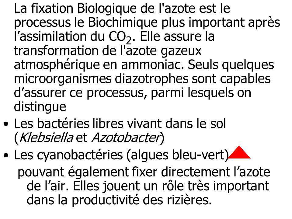 La fixation Biologique de l azote est le processus le Biochimique plus important après l'assimilation du CO2. Elle assure la transformation de l azote gazeux atmosphérique en ammoniac. Seuls quelques microorganismes diazotrophes sont capables d'assurer ce processus, parmi lesquels on distingue