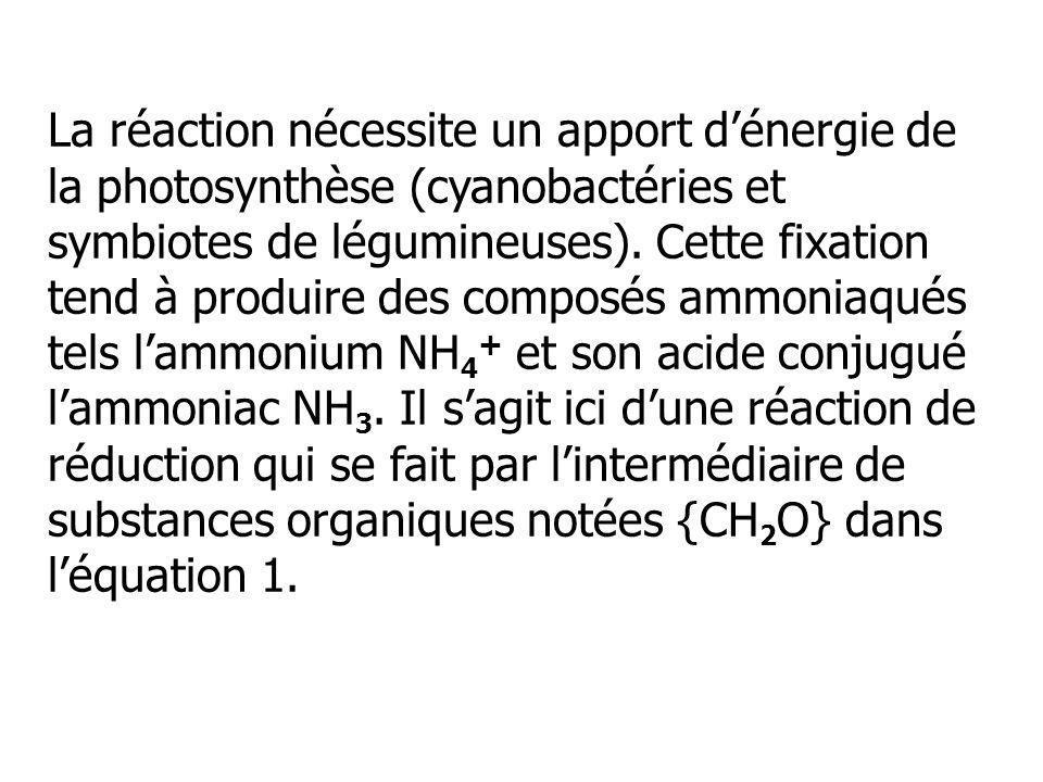 La réaction nécessite un apport d'énergie de la photosynthèse (cyanobactéries et symbiotes de légumineuses).