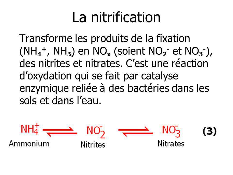 La nitrification